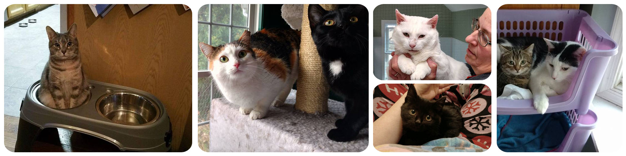 Fund Veterinary Services, No-Kill Cat Shelter | Stevensville, MD on squirrel home, chipmunk home, fast cat home, ferret home, mountain lion home, lizard home, duck home, pet cat home, dog cat home, stray cat home, cat lady home, pig cat home,