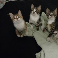 Three Kittens for Adoption